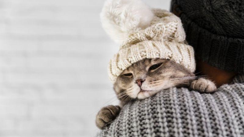 Aprende a identificar cuando tu gato tiene dolor y atiende sus malestares a tiempo