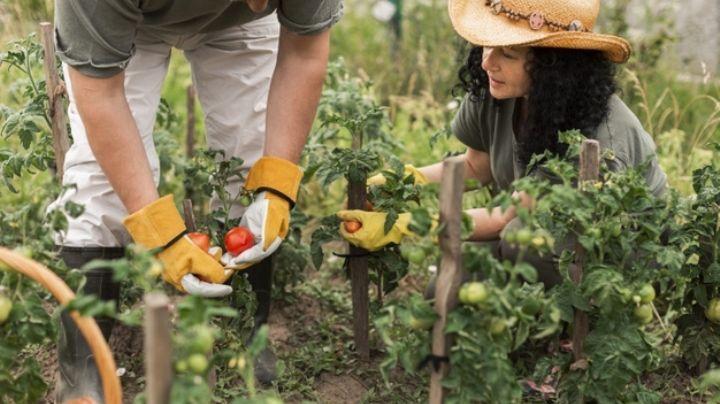 Sorprendente con los beneficios de tener un huerto en casa durante la pandemia