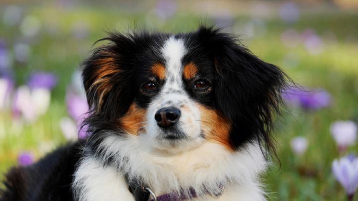 Lleva a tu mascota al extranjero con estos nombres para perros inspirados en Europa