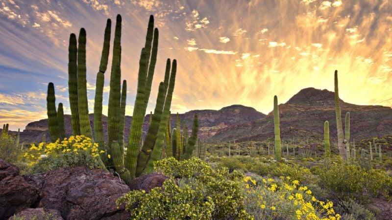 Clima Sonora: Este es el pronóstico del tiempo para hoy lunes 19 de abril
