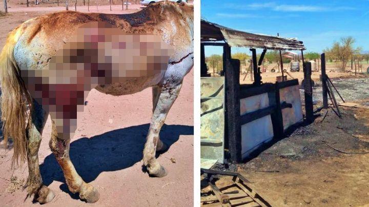Voraz incendio consume establo a las afueras de Hermosillo; cría de yegua no logra sobrevivir