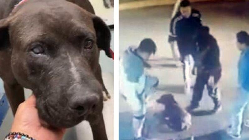 Justicia para Negro: Capturan a padre e hijo tras propinar golpiza y apuñalar al perrito