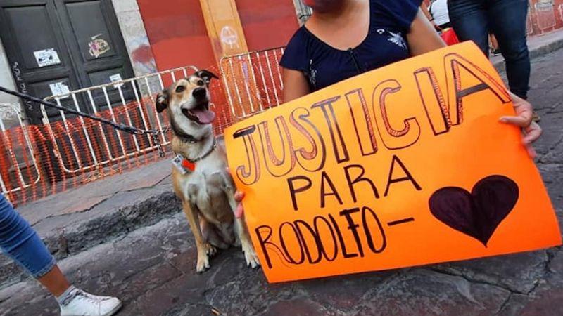 Justicia para 'Rodolfo Corazón': Convocan a marcha en Guaymas tras brutal asesinato de perrito