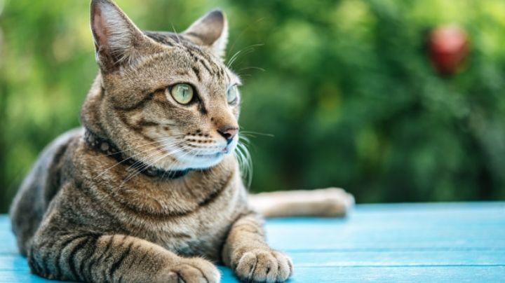 Olvídate de los pelos de gato en tu ropa con estos sencillos consejos