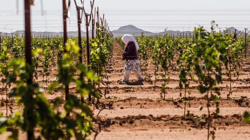 Sequía le costará millones a la economía del sur de Sonora