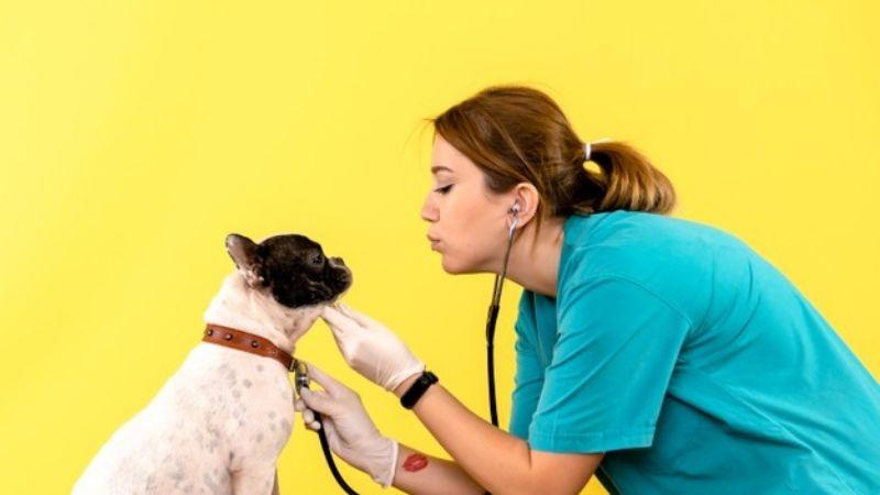 Día Mundial del Veterinario: Felicita al doctor de tus mascotas con estas frases motivadoras