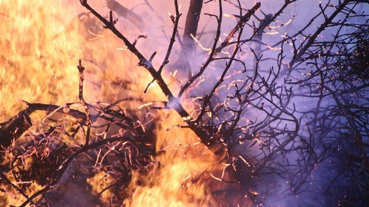 Terrible final: Fuego en terreno baldío alcanza a indigente y lo calcina; no pudieron ayudarlo
