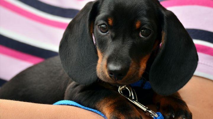 Festeja los Premios Oscar y ponle a tu perro un nombre de un personaje de película romántica