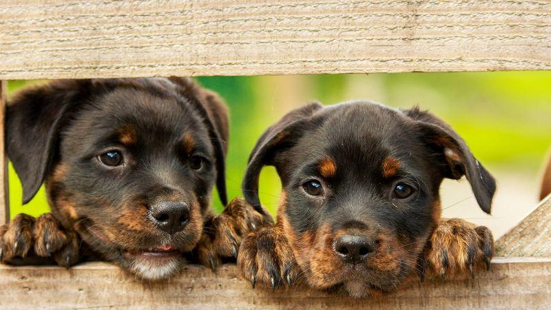 De terror: Expertos temen el surgimiento de una nueva pandemia que ataque a los perros