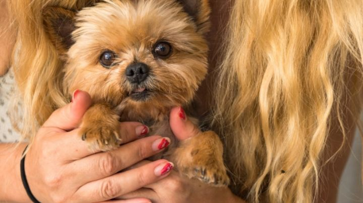 ¿Eres una amante de la belleza? Estos nombres para perros serán perfectos para tu mascota
