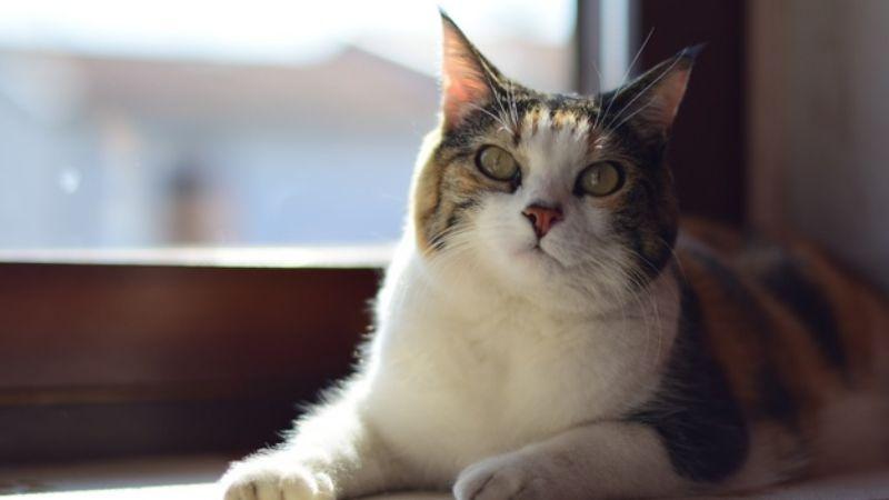 Síndrome del gato paracaidista: Conoce de que se trata este curioso padecimiento