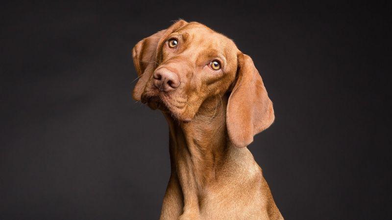 Deja que la música te guíe: Ponle a tu perro el nombre de algún cantante famoso