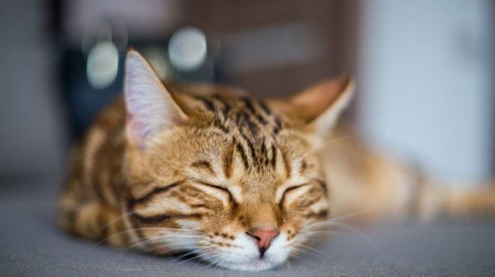 Estos 'tips' te ayudarán a educar a tu gato como toda una profesional