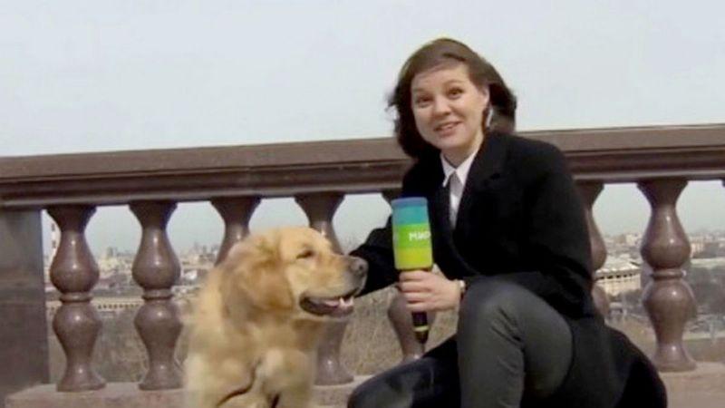 VIDEO: Perrito le roba el micrófono a una reportera mientras hacía una transmisión en vivo