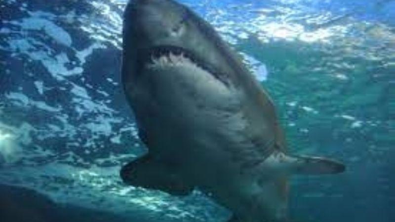 Mujer de 64 años es atacada por un tiburón mientras nadaba en las playas Florida