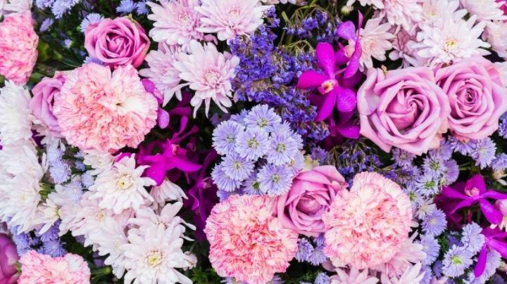 ¿No tienes mucho tiempo? Estas flores de poco mantenimiento serán perfectas para ti