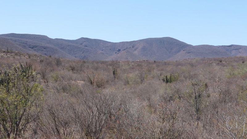Deslindes en las tierras yaquis al sur de Sonora: Un conflicto político lleno de ambición