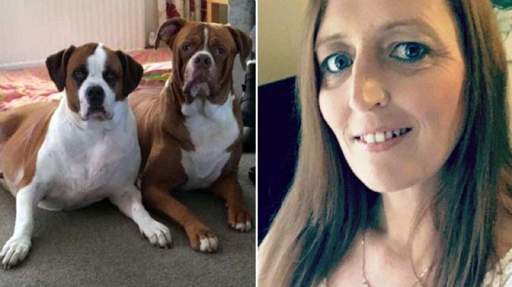"""¡Atacan a mi mamá!"": Dos perros asesinan brutalmente a su dueña tras discutir con su hija"