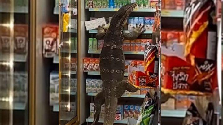 ¿'Godzilla'? Captan en VIDEO a un lagarto gigante en un 7-Eleven de la India