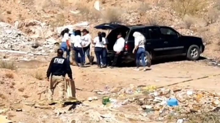 Hallan nuevos restos humanos en fosa clandestina de Guaymas; habría hasta cinco cadáveres