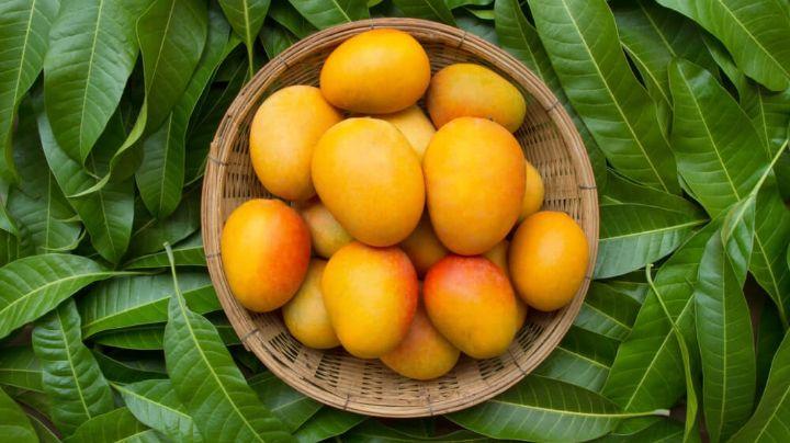 ¡No las ignores! Descubre los beneficios de las hojas del delicioso mango