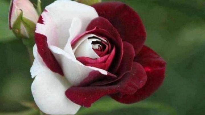 ¡Extrañas y maravillosas! Asómbrate con la apariencia de las flores más raras
