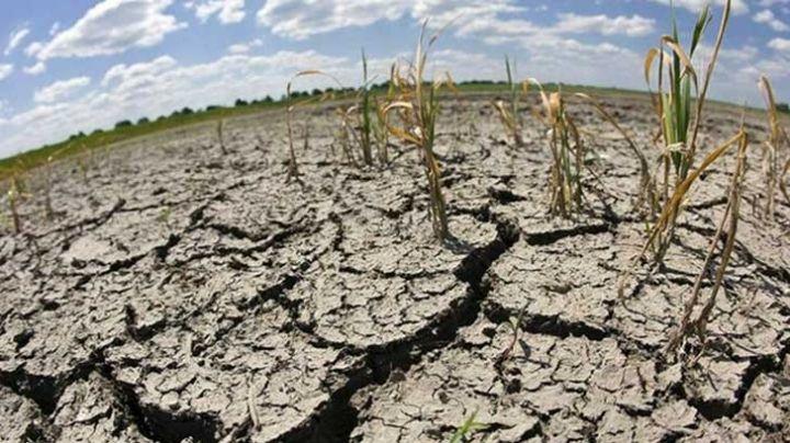 Sonora: Sequía y problemas del campo amenazan con 'golpear' a la sociedad