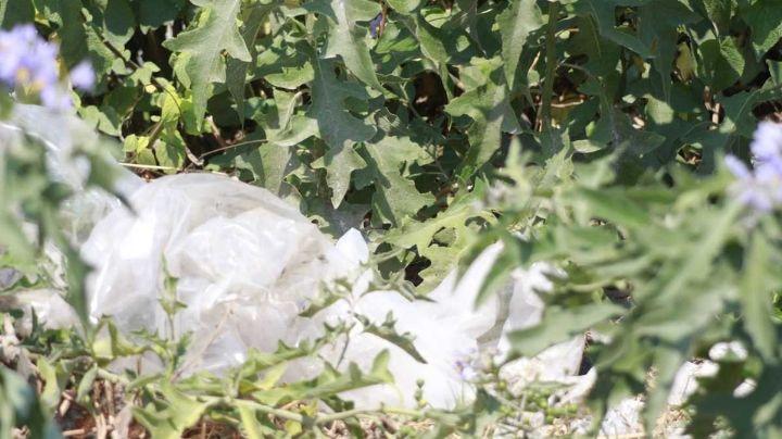 Macabro: Hallan cadáver putrefacto de mujer; se acumularían 33 feminicidios en Puebla