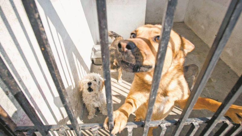 Crueldad animal, a la alza en Navojoa; hay tres casos de perros baleados
