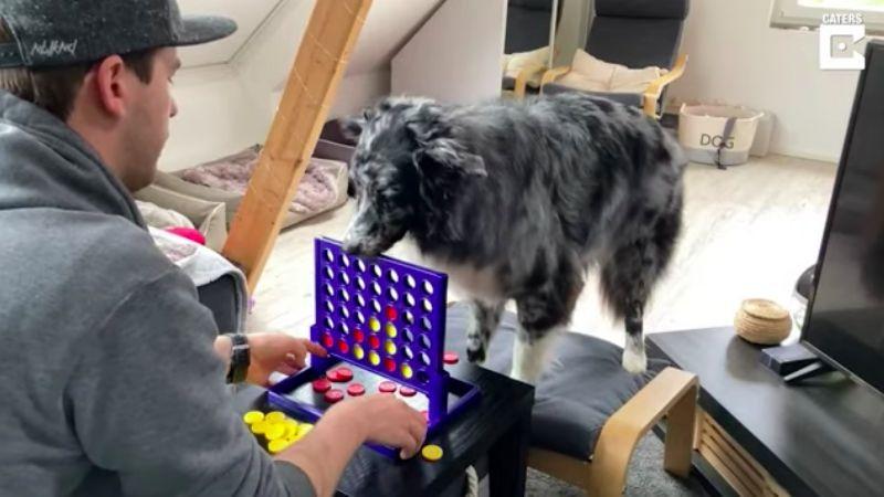 (VIDEO) ¡Qué destreza! Este 'perrito' cautiva las redes al jugar Jenga con su dueño