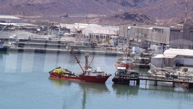 Guaymas: Ambientalistas piden sanciones a empresas pesqueras por el derrame de aceite y desperdicios