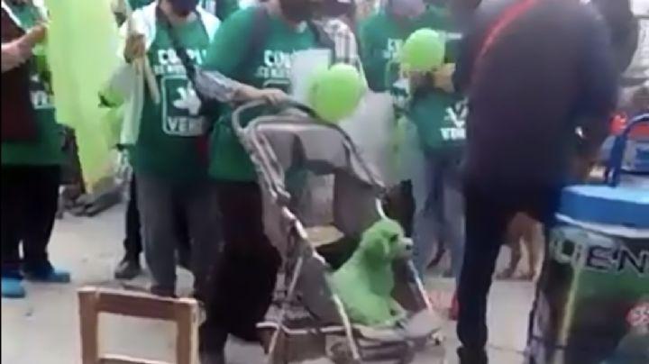 VIDEO: ¡Indignante! Pintan de verde a un perro para acto de campaña electoral en Puebla