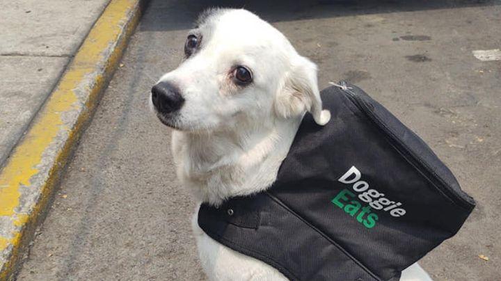 Trabajo con causa: 'Perrita' reparte comida y con lo que gana ayuda a un refugio animal