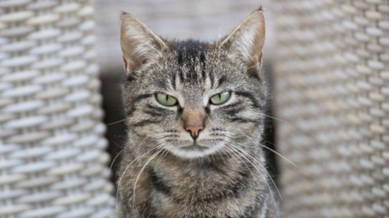Descubre las 5 cosas que tu gato odia que hagas y que probablemente no sabías