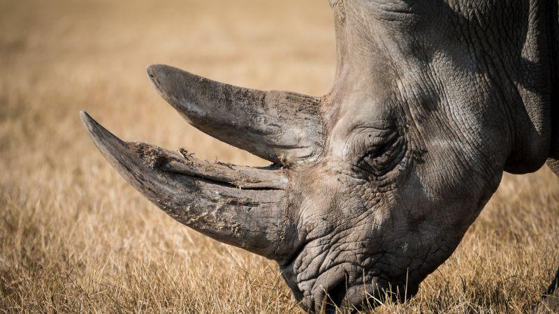 VIDEO: Un rinoceronte toca el teclado con su propio hocico; deja flechado a todo Instagram