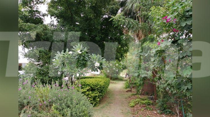Familia Martínez crea el Bulevar de la Alegría en Hermosillo con gran variedad de plantas