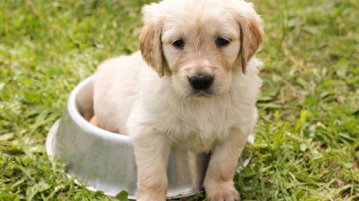 ¡Macabro! Expertos hallan un nuevo tipo de coronavirus que afecta a perros y humanos