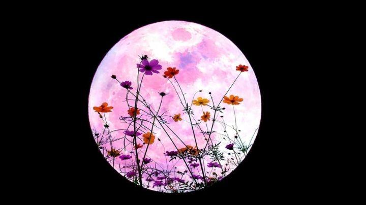 Superluna de flores: Así es la forma en la que puede ver este fenómeno en México