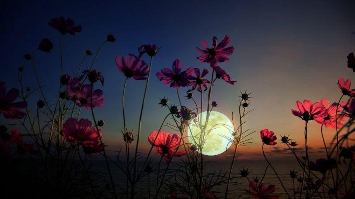 De película: Estos son los posibles efectos de la Superluna de flores sobre la Tierra