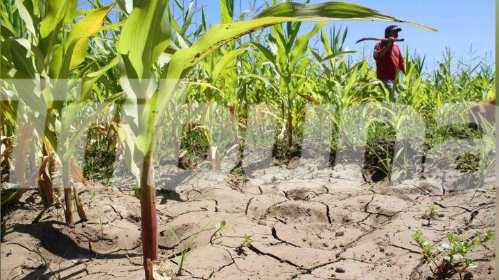 Agricultores de Guaymas y Empalme esperan que existan lluvias en el próximo ciclo tras grave sequía