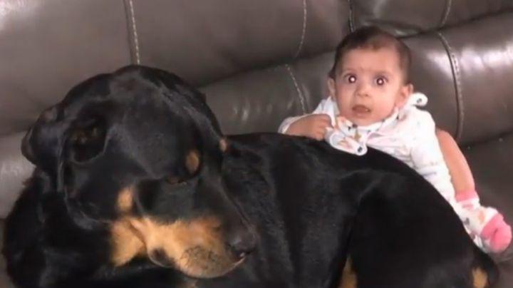 Perros rottweiler matan a un bebé de 10 meses de edad; su papá lo dejó solo unos minutos