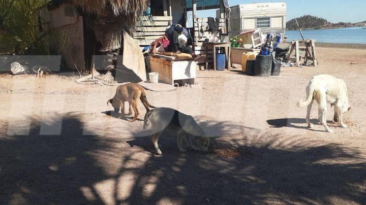 Trabajadores en Guaymas impulsan el respeto y protección a la vida animal