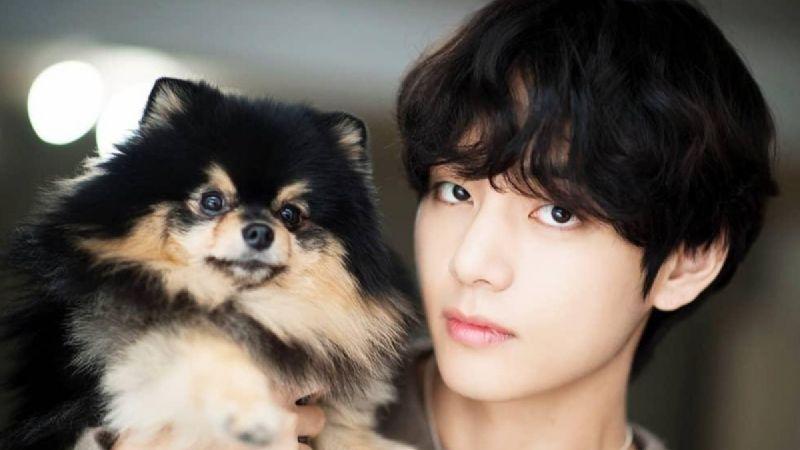 ¿Amas el K-Pop? Inspírate en la música coreana con estos nombres para perros basados en BTS