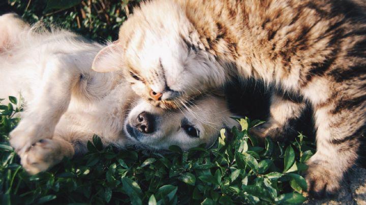 ¡Felices para siempre! Estos consejos te ayudarán a que tu perro y tu gato se lleven bien