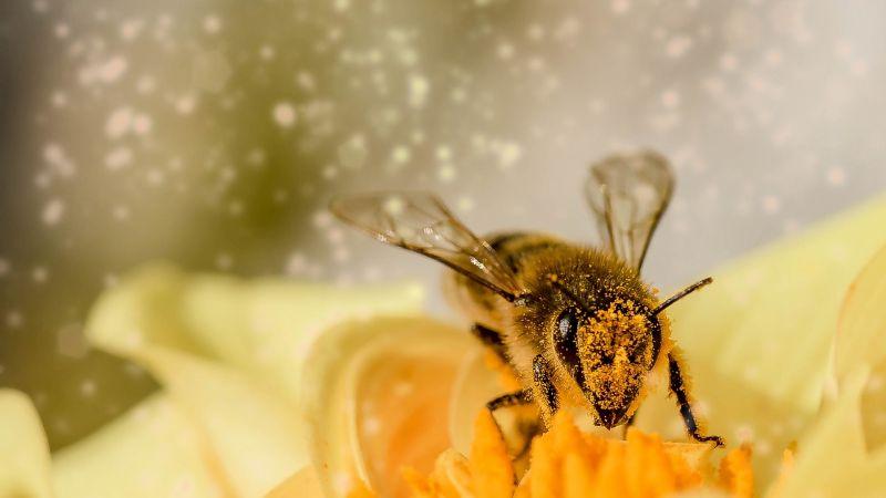 VIDEO: Dos abejas impactan a todo Twitter al abrir una botella de refresco con sus patas