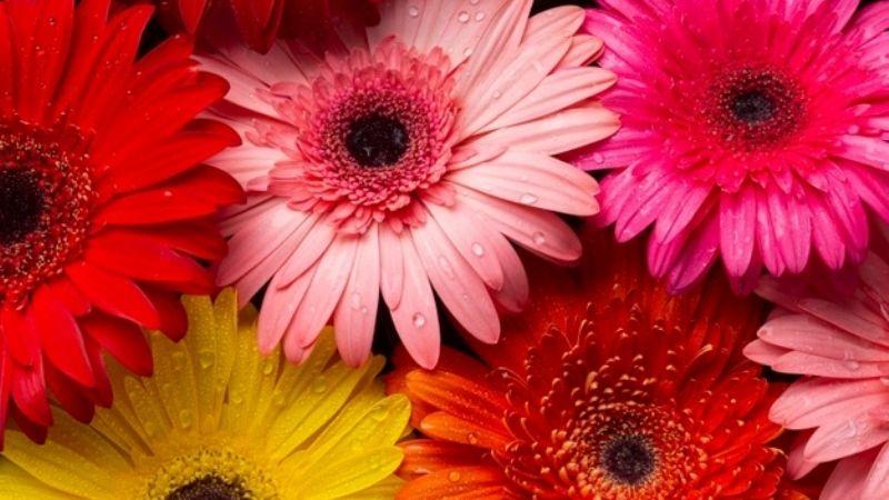 Logra tender el jardín más hermoso con estas flores que puedes cultivar en casa