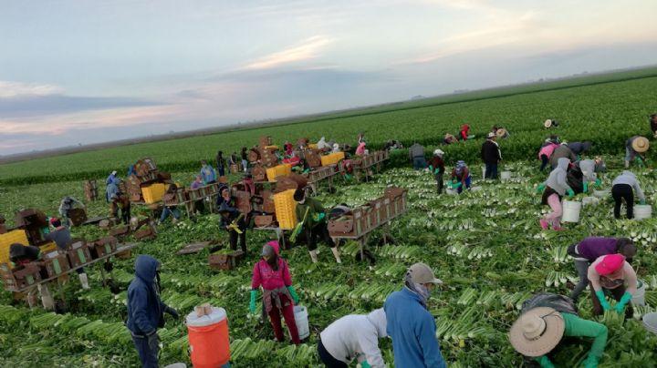 Horticultura en el sur de Sonora podría disminuir sus siembras debido a la sequía