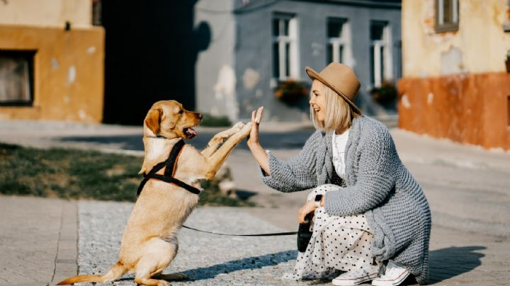 VIDEO: Coronavirus separa a una mujer de su mascota; reencuentro entre ambas se hace viral