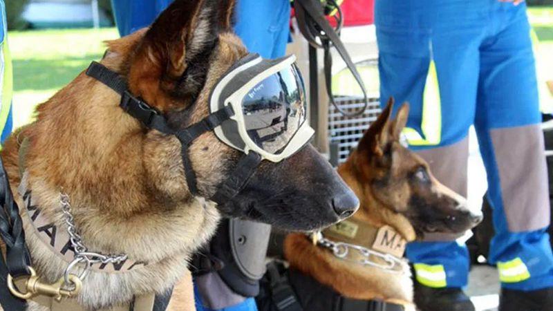 Ellos son Evil y Ecko, los perros rescatistas que ayudaron en el derrumbe del Metro de la CDMX