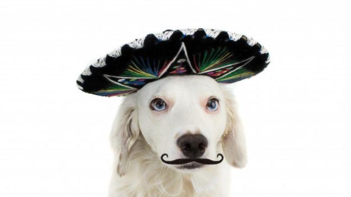 Estos nombres para perros inspirados en la comida mexicana te sacarán muchas risas